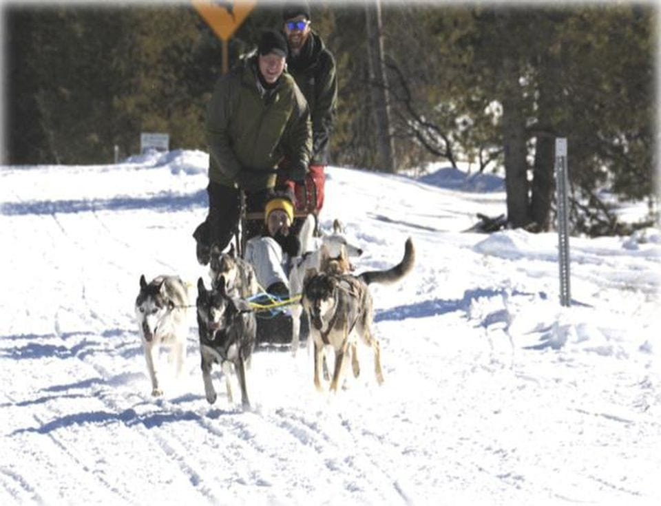 The power of teams- Dogsled